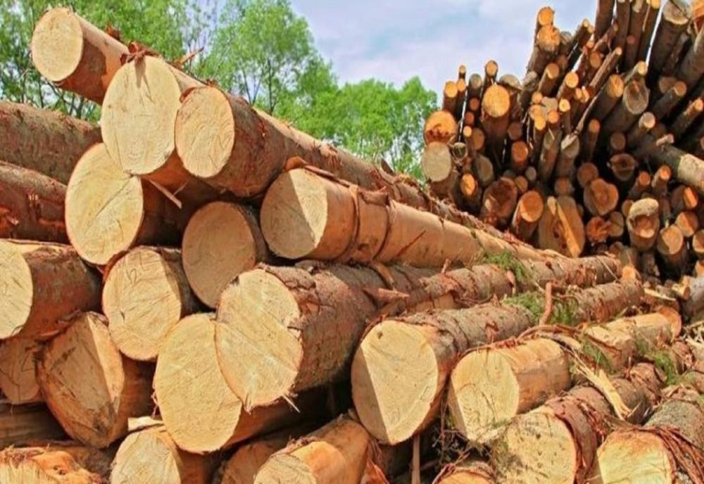 Trei companii de exploatarea lemnului din Bistrița-Năsăud, amendate de Consiliul Concurenței