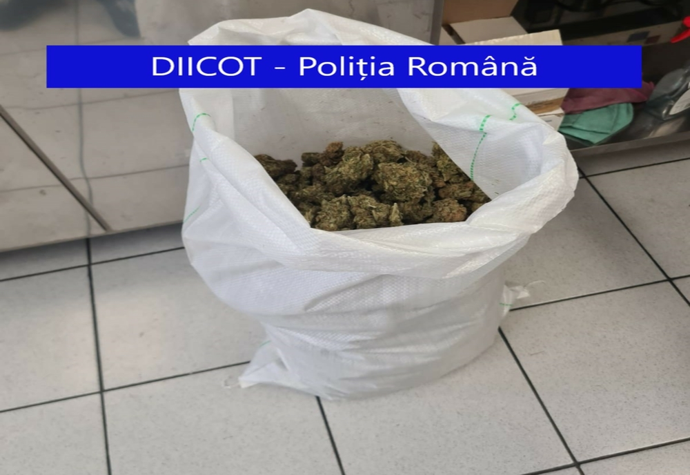 FOTO/VIDEO: Tânăr din Cluj-Napoca, prins în flagrant de procurorii DIICOT Bistrița-Năsăud, cu 4 kg de cannabis